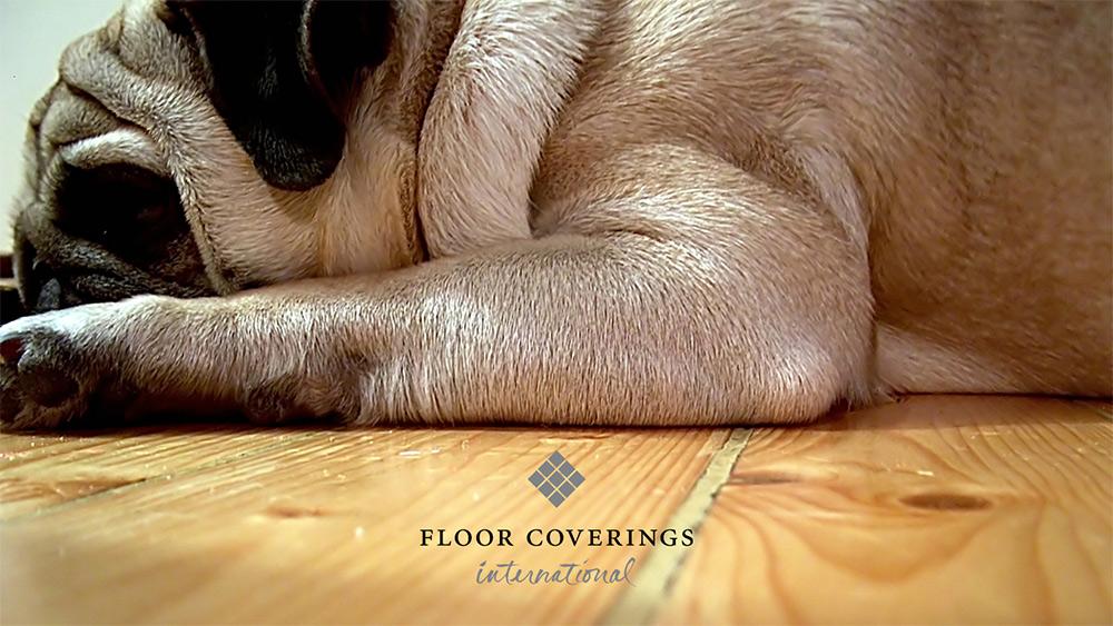 Floor Coverings International franchise Dog lays on Beautiful Flooring